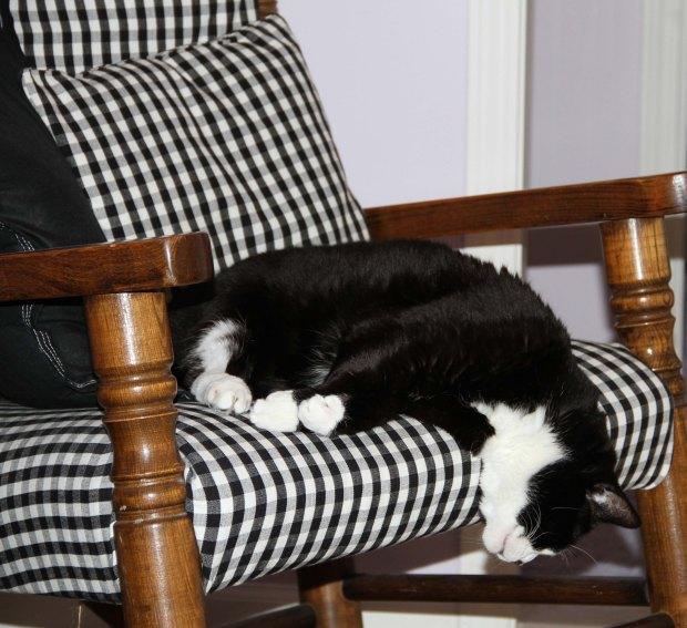 Cleo Sleeping 1