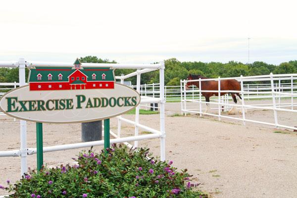 Excerise-Paddocks