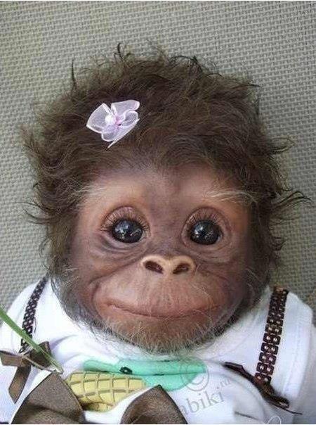 Baby(murat Tavli)