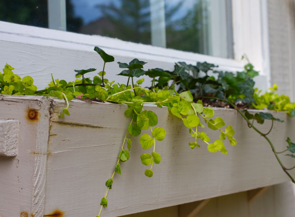 greenery-window-box