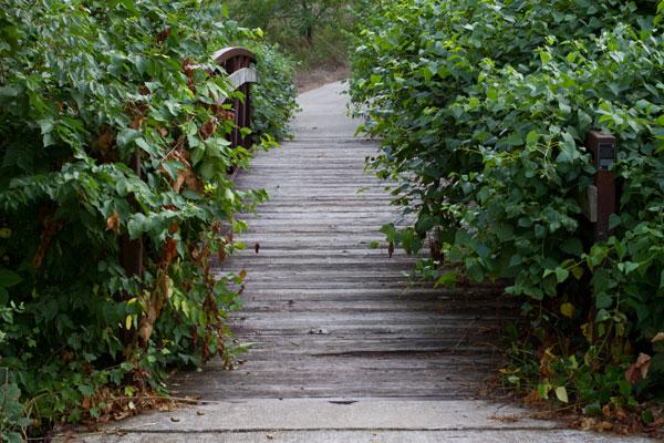 3-Walk-on-Waterfall-Trail
