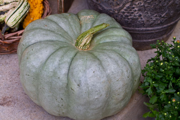 heirloom-pumpkin